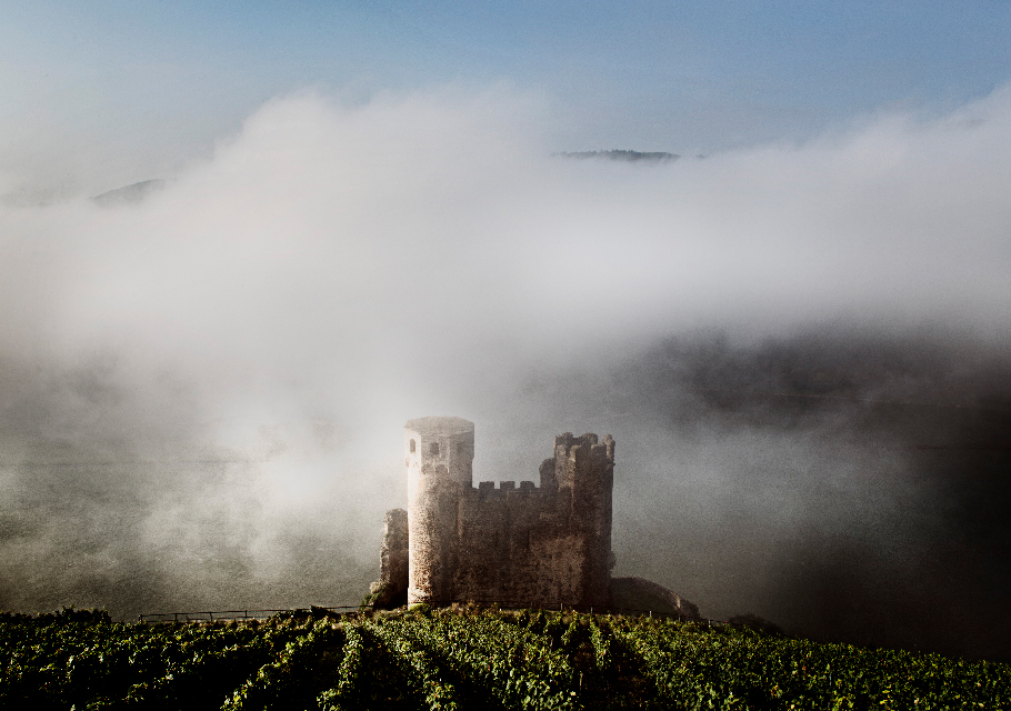 A castle in Germany with a vineyard growing around it